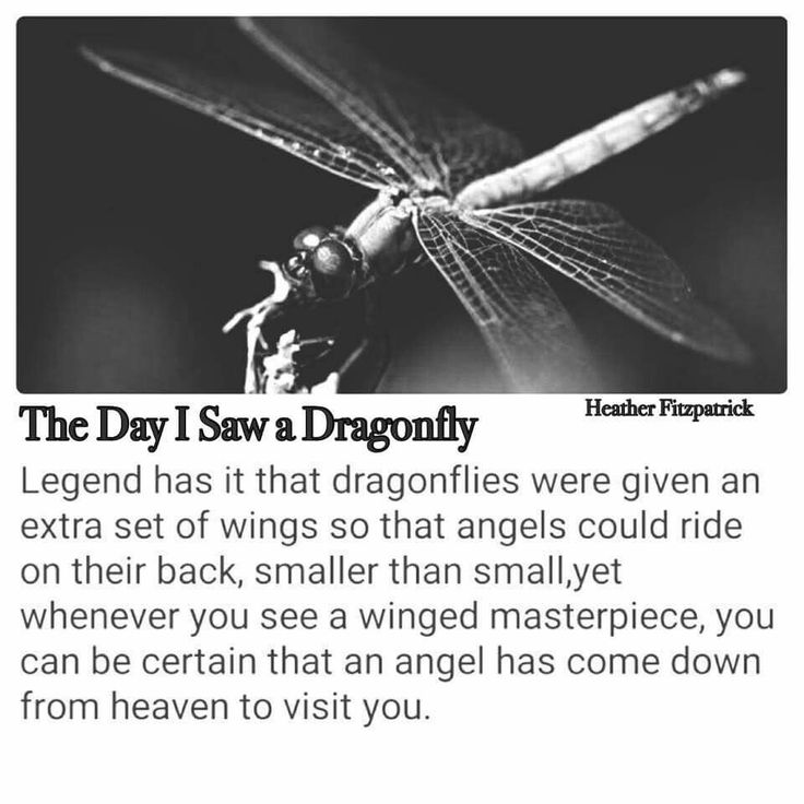 The legend of dragonflies