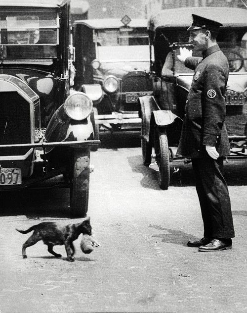 Real police officers love cats: It was a sunny summer afternoon, July 29, 1925. Harry Warnecke, a photographer for the New York News, got a phone tip that a cat trying to carry its kittens home was tying up traffic because a policeman had stopped the cars on a busy street to allow it to cross.