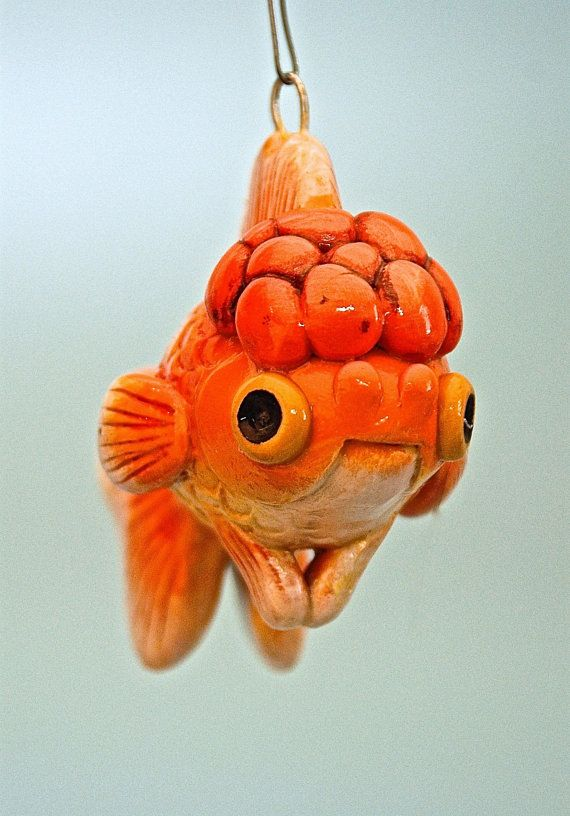 17 best ideas about oranda goldfish on pinterest pretty for Pesce rosso butterfly