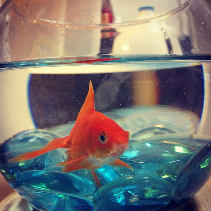 Pin by isabella downey on getting creative with decorative for Dollar tree fish bowls