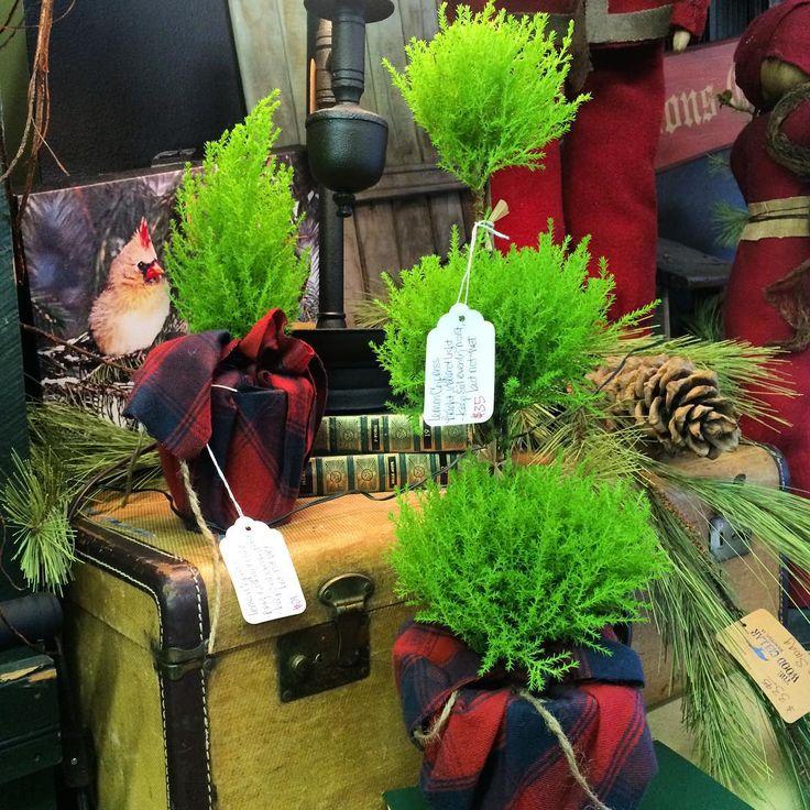 die besten 25 cypress plant ideen auf pinterest. Black Bedroom Furniture Sets. Home Design Ideas