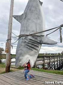 Shark Catch Photo Op in Clermont, Florida.
