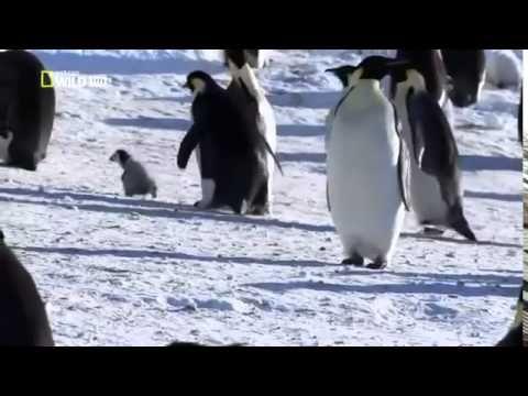 PENGUINS: Animals for children. Kids videos. Kindergarten | Preschool learning - YouTube