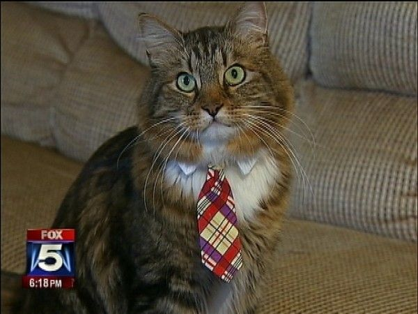 "Cat Takes Third In Virginia's Senate Race. Hank the Cat, a Maine coon who ran on a platform of ""Jobs, Animal Rescue/Spay & Neuter programs, and Positive Campaign Reform"" received 6,000 votes in Virginia's Senate election."
