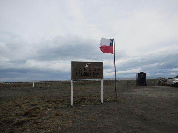 Parque Pingüino Rey. Tierra del Fuego. XII Región de Magallanes. Chile.