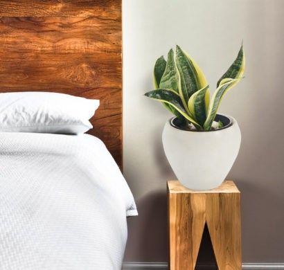 grne zimmerpflanzen und heilkruter die unser schlaf positiv beeinflssen - Kopfteil Plant Holzbearbeitung