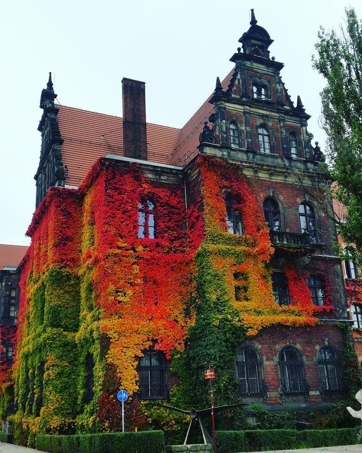 Incredibly couloured ivy on Museum of Natural History in Wroclaw Poland