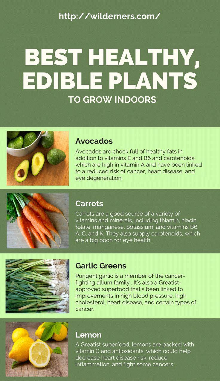 Best Healthy Edible Plants To Grow Indoors Growing 640 x 480