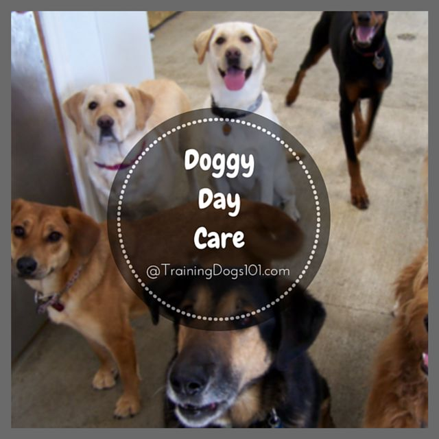 Best 25 doggy day care ideas on pinterest puppy treats for Best doggy day care