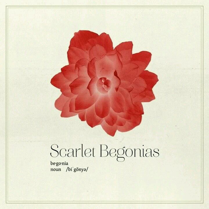 17 Best Images About Scarlet Begonias On Pinterest Antiques Scarlet And Mists