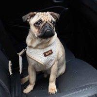 gala-seatbelt-dog-leashpuppia-beige-2.jpg