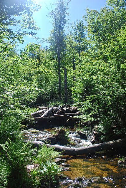 Photos de Bavière - Randonnée du Mont Lusen - Forêt Bavaroise - Bayerischer Wald - https://www.facebook.com/destinationbaviere