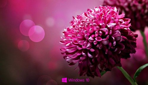 Desktop Backgrounds for windows 10 - purple flower #windows10