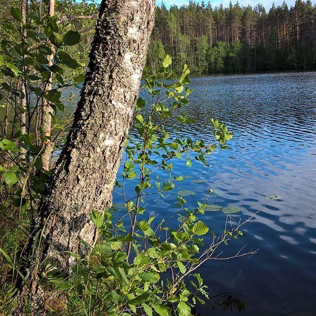 Juhannusviikkoa vietetään erinomaisessa säässä #kesä #summer #järvi #lake #rokua #visitrokua #visitfinland #visitoulu #luontoonfi #yleluonto #finnishnature #rokuageopark #ourfinland #lovenature