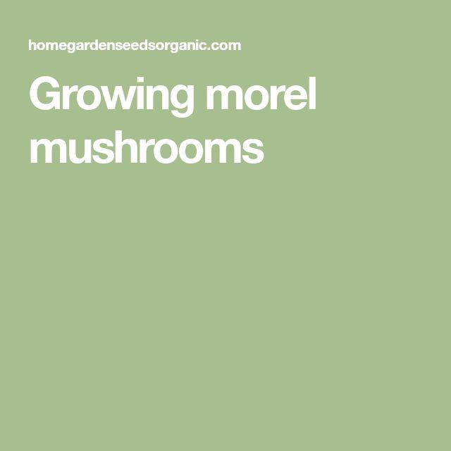 Growing morel mushrooms