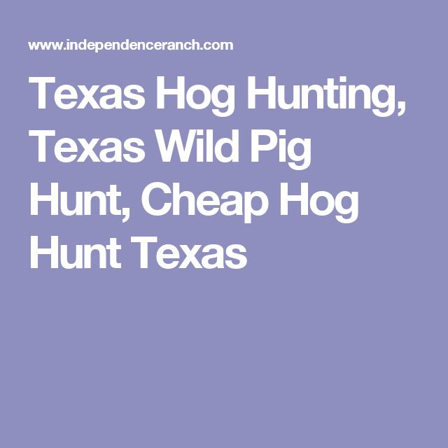 Texas Hog Hunting, Texas Wild Pig Hunt, Cheap Hog Hunt Texas