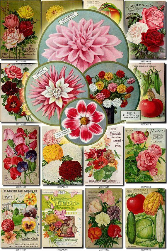 Seeds 54 Catalogs Covers Collection With 92 Vintage Images Etsy Catalog Cover Vintage Images Seeds