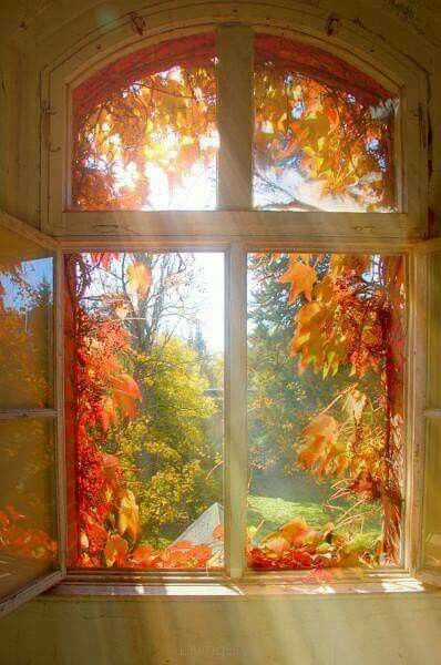 Golden Leaves of Autumn around my Window ....