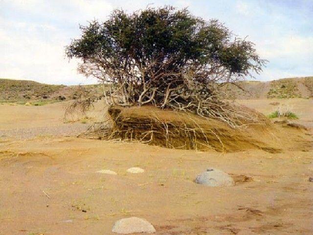 Desertificación en Argentina.