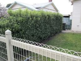 Love the curly wire fence