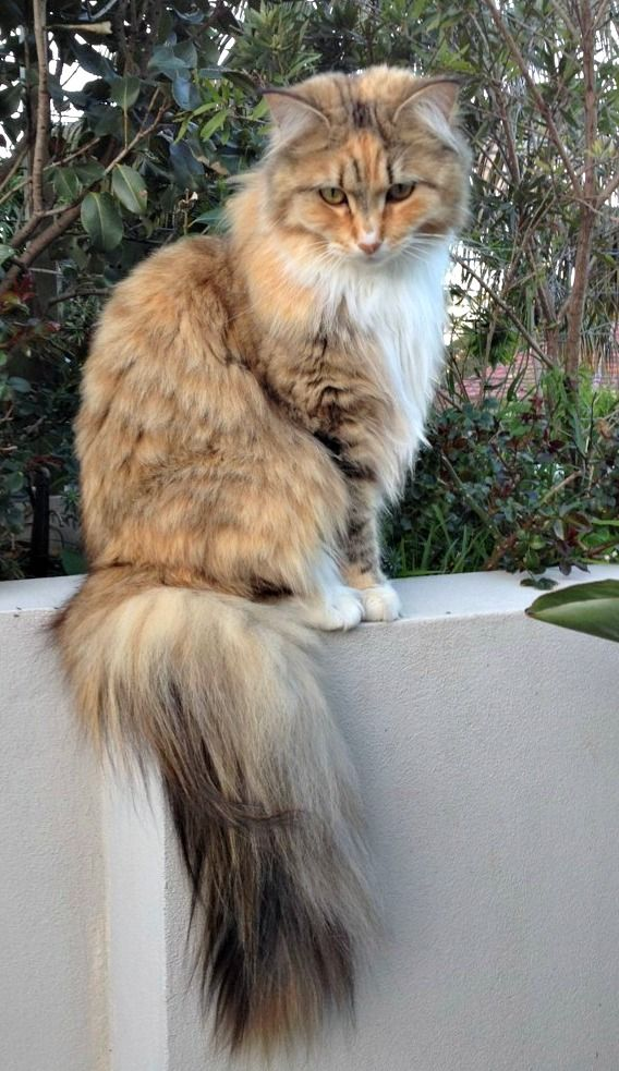 This is Topaz, she lives with literary expert Susannah Fullerton, find out who's the boss.