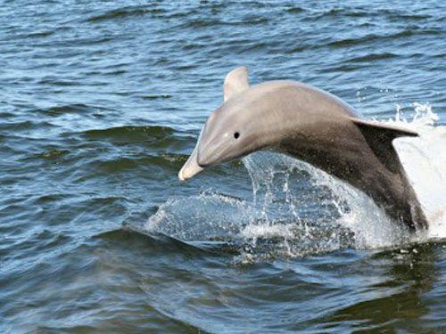 Dolphin Cruise Virginia Beach Va