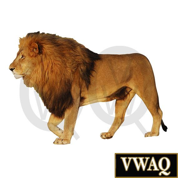 Lion Sticker For Wall Lion Wall Decal Peel And Stick Animal Decal Safari  Lion Wall Art Home Decor Part 66