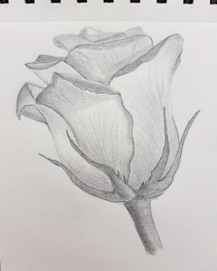 My First Pencil Drawings Pencil Drawing Draw Flowers Rose Pencil Drawings Of Nature Pencil Drawings Of Flowers Art Drawings Sketches