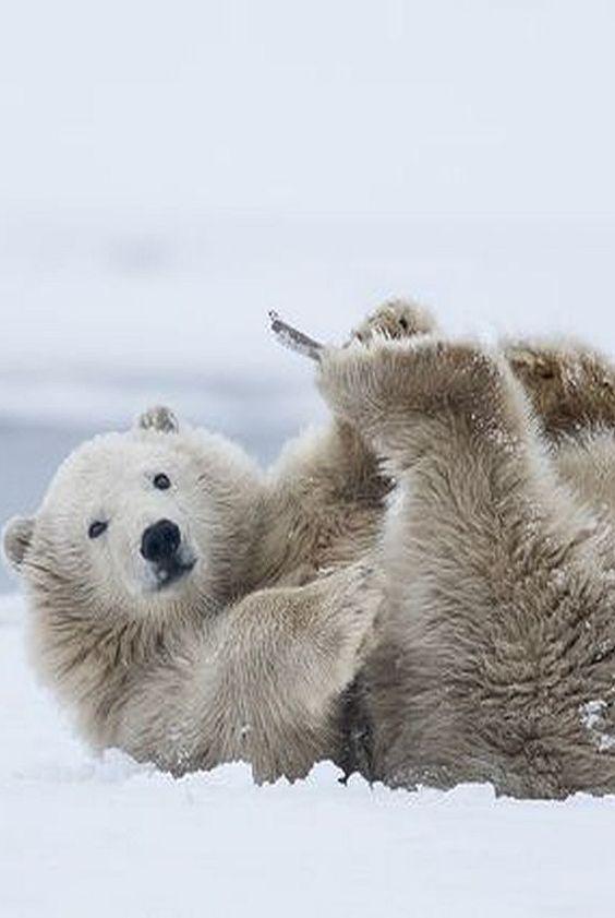 UPSIDE DOWN ;-))) POLAR BEAR  Foto von missymandel von Flickr