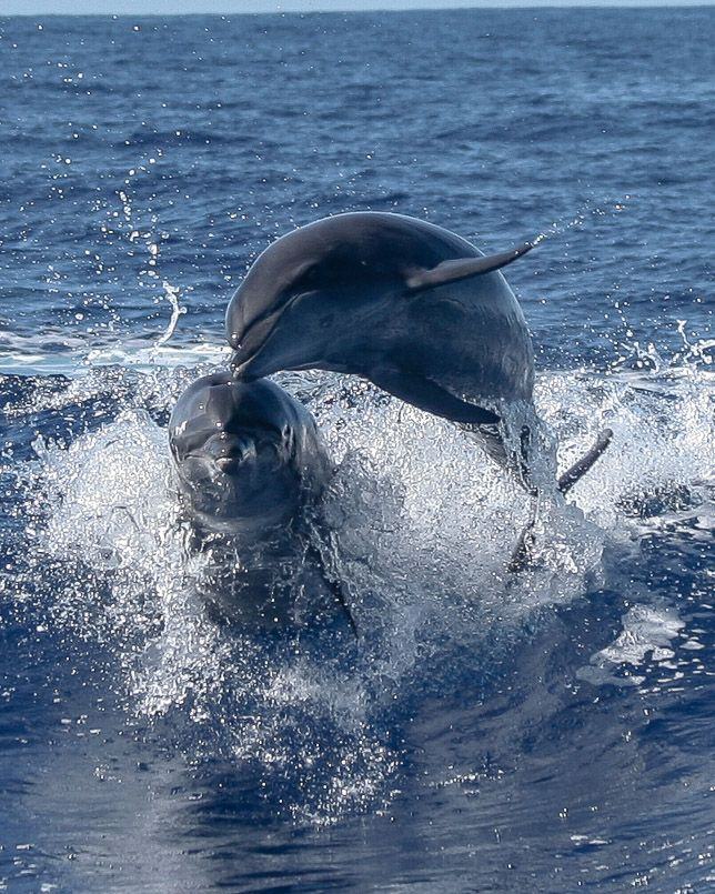 1342 best DOLPHINS images on Pinterest | Ocean life ...