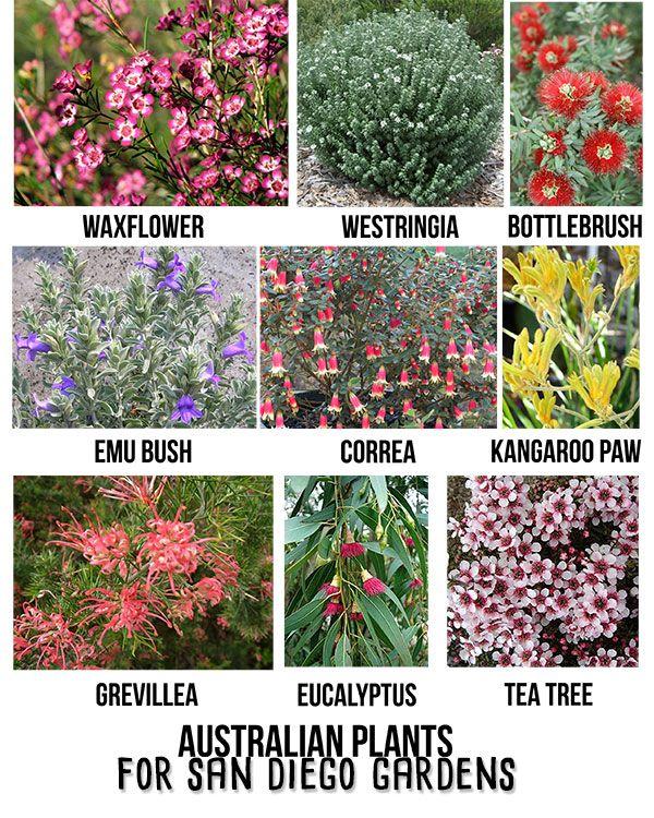 Australian Plants For Southern California Gardens