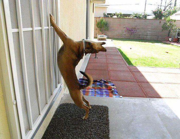 25 animaux qui veulent rentrer... de suite! - http://www.2tout2rien.fr/25-animaux-qui-veulent-rentrer-de-suite/