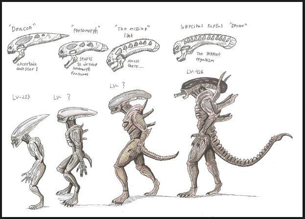Xenomorph Vs Deacon xenomorph types   crea...