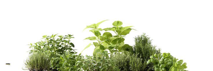 Szkło z motywem NOLTE - zioła