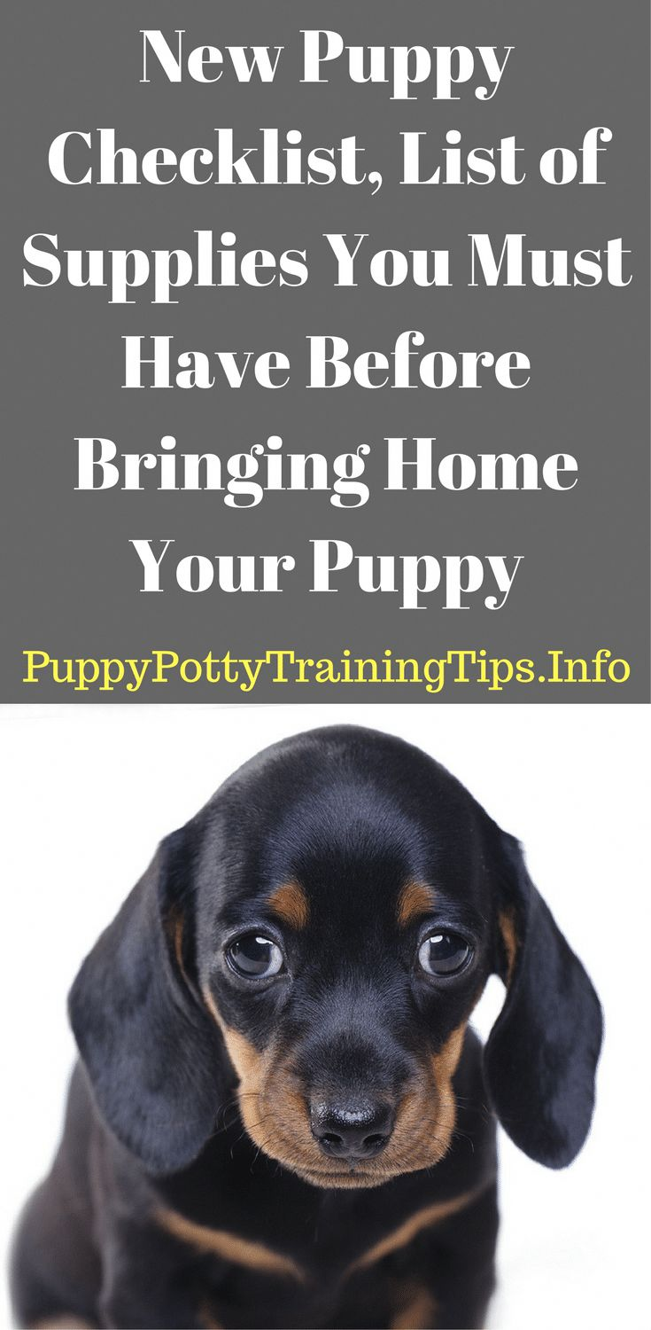 New Puppy Checklist, List of Supplies You Must Have Before