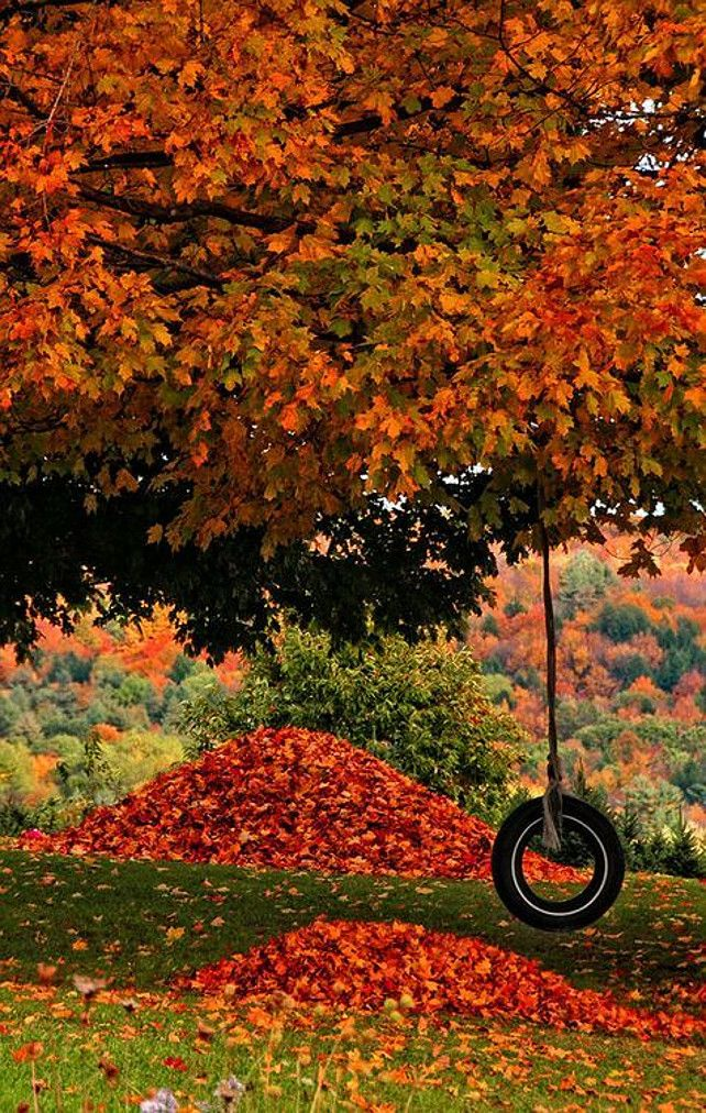 Fall Colors. Tree. Fall. Leaves.  Via Flowers Garden Love