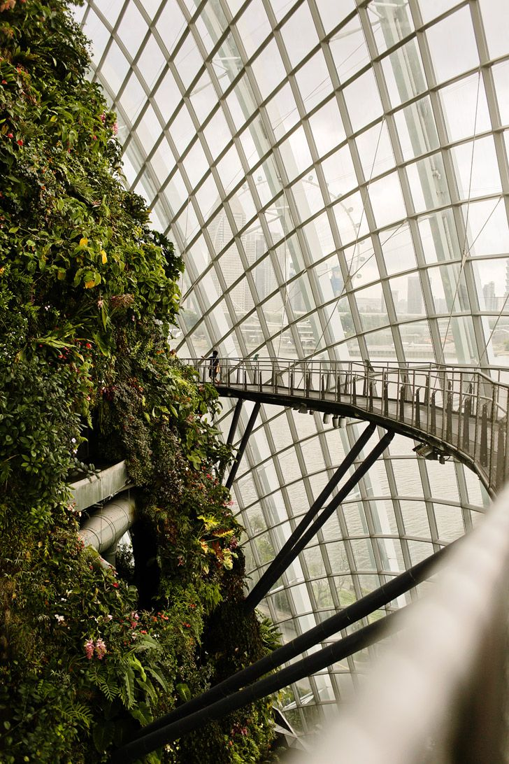 Cloud Forest Gardens By the Bay Singapore - a mysterious world veiled in mist. Take in breath-taking mountain views surrounded by diverse vegetation and hidden floral gems. And learn about rare plants and their fast-disappearing environment // localadventurer.com