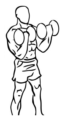 Biceps Curl with Dumbbell 2