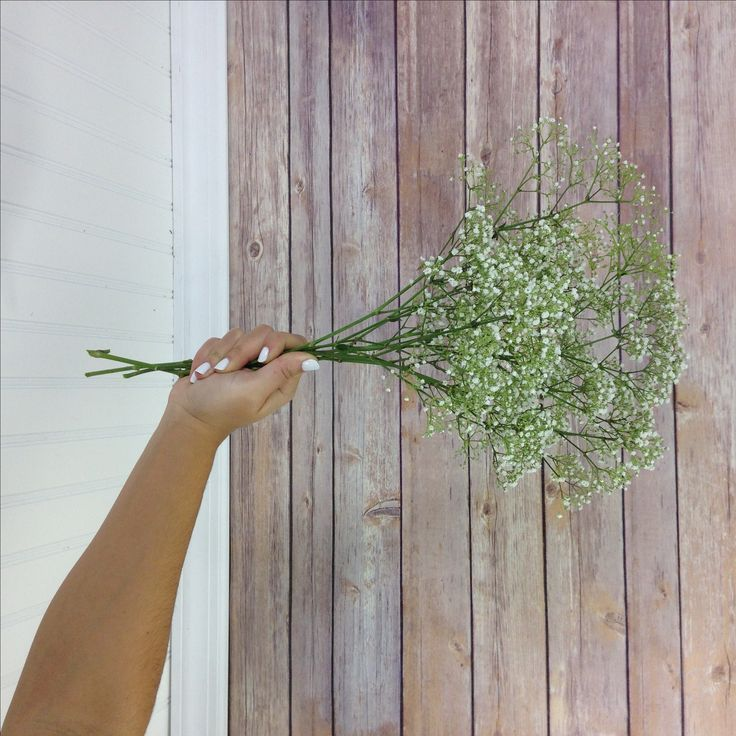 Baby's breath (Gypsophilia) can be used for so many different kinds of floral arrangements. Use these pictures to help you understand how much you need.