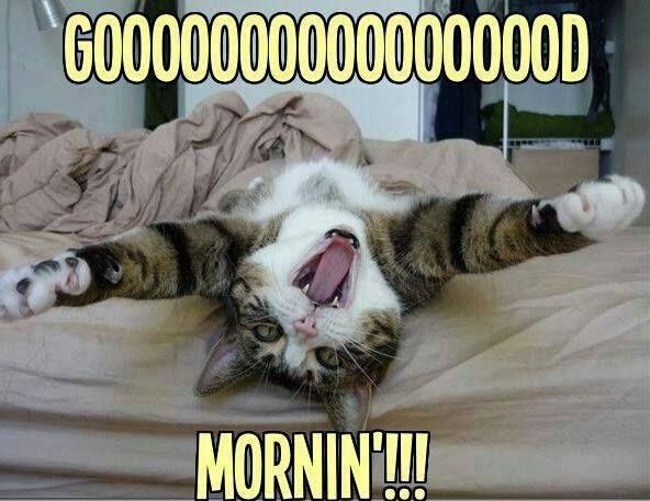 vrolijk wakker