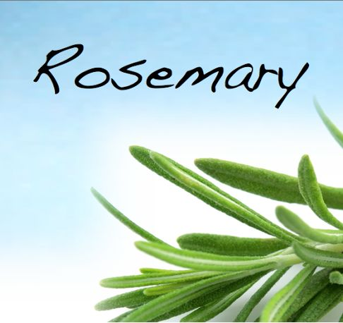 Rosemary is a symbol of a strong woman. It will clear your mind, improve your memory & help with learning. Use in herbal baths for cleansing and purification. Hang bundles of rosemary or have a rosemary plant growing near your front door to help to keep out negative energy. Place a rosemary sprig beneath your pillow to banish bad dreams, relax your mind & improve your spirits. Burn as an incense to remove negative energy. In spell casting rosemary can be used as a substitute for…