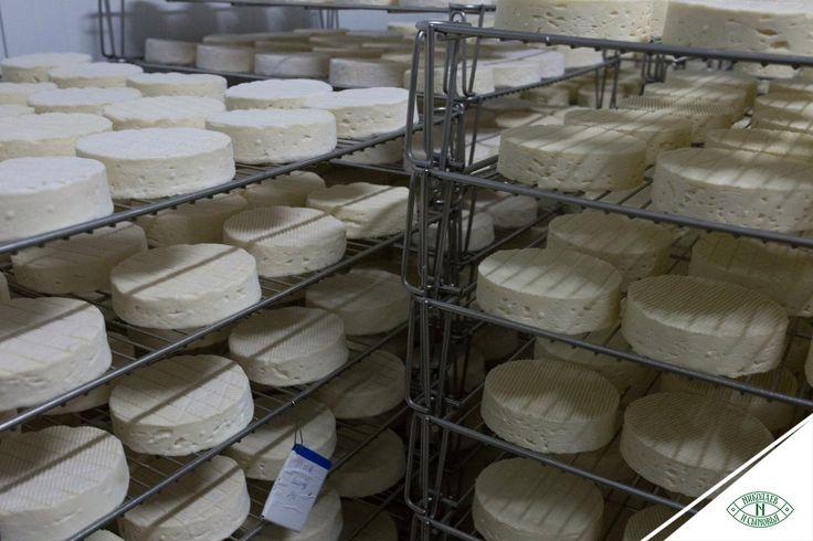 Свежесть сыров (как, кстати, и вина) бывает нескольких стадий. Выделяют начало, развитие, пик и деградацию. Во Франции существует целая культура изготовления сыров, которой пока нет в России. Так, есть профессия, название которой можно перевести как «доводчик сыра». Доводчики выдерживают сыр до пика и поставляют его на рынок в момент максимального раскрытия всех качеств. Пик у каждого сыра разный. У «Камамбера Лефкадии» — от 2 недель до месяца. Когда пик проходит, продукт считается…