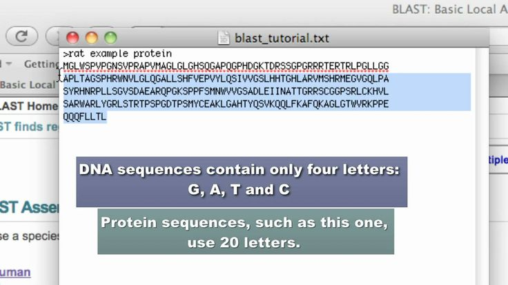 http://www.biotechnology.jhu.edu/ Tutorial for BLAST, a cornerstone bioinformatics tool at NCBI. BLAST is the Basic Local Alignment Search tool and will prot...