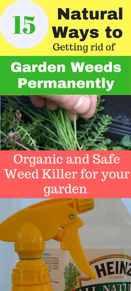 15 Natural Ways To Get Rid Of Garden Weeds Permanently