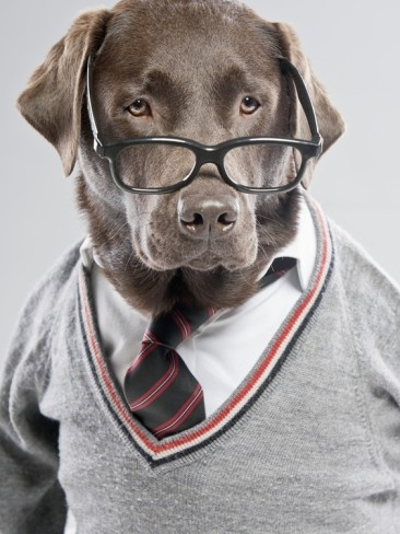 Dog In Sweater And Glasses Pets Geek Culture And Glasses