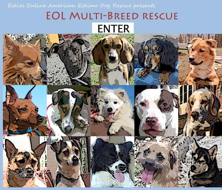 Eskies Online Multi Breed Dog Rescue