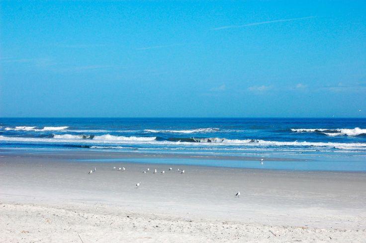 Gulls on the beach, Jacksonville FL.