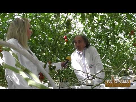 TV show Gaiorama visit to Agritex greenhouse. The Greek production team talks about Pest Management, Hydroponics, Sustainability, Quality control, Market satisfaction- crucial factors for a successful branded agriculture produce