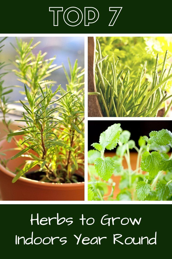 Top 7 Herbs To Grow Indoors Year Round Gardening Know How S Blog