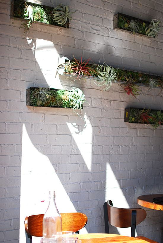 Air Plants? | Chicago - Yelp